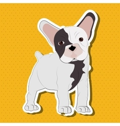 French bulldog design pet and animal concept vector