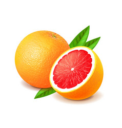 Grapefruit and slice isolated on white vector image vector image