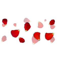 Set of naturalistic rose petals on background vector