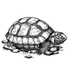 Engraving turtle vector