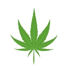 Cannabis marijuana leaf icon vector