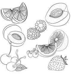 line art various fruits vector image vector image