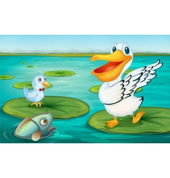 Pelican on the lily pad vector