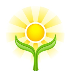 Sun above two green leaves vector