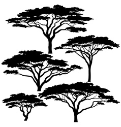 Acacia tree silhouettes vector image vector image