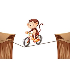 Monkey riding bike on the rope vector