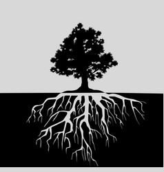 Oak tree and its roots black and white vector