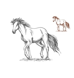 Running white horse sketch portrait vector