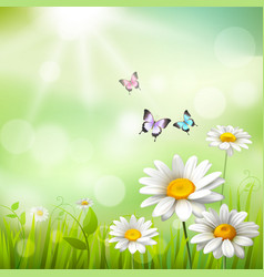 Daisies summer background vector