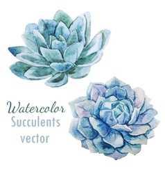Succulent flowers vector