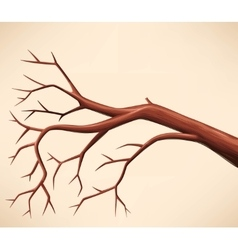 Bare tree branch vector