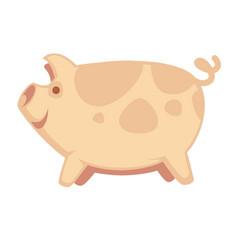 Cute big pig vector