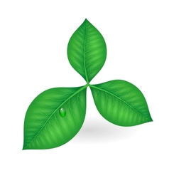 Green leaves symbol vector image