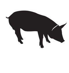 Isolated pig silhouette vector