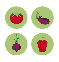 white background with vegetables tomato eggplant vector image