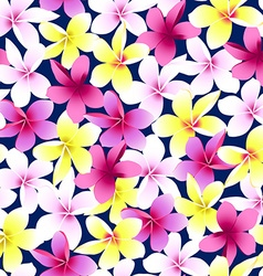 Tropical colorful frangipani plumeria flower vector
