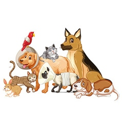 Different kind of pet being hurt vector image vector image