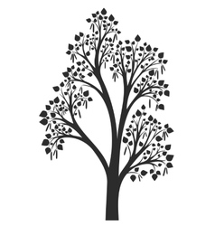 silhouette of birch tree with leaves vector image vector image
