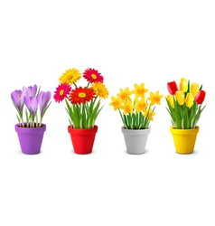 Collection of spring and summer colorful flowers vector