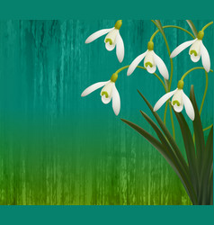 Floral background spring flowers snowdrops vector
