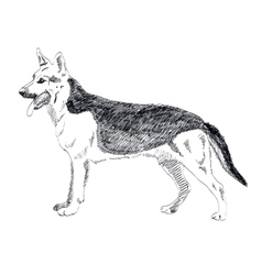 German Shepherd hand drawn isolated on vector image