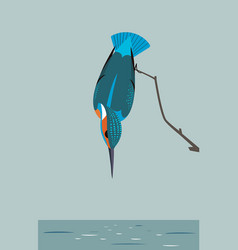kingfisher is looking for prey in the river vector image