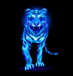Blue fire tiger isolated on black background vector