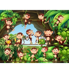 Monkeys living in the forest vector image