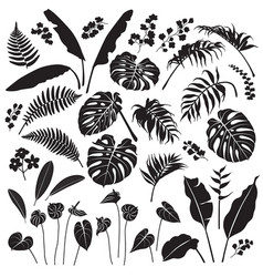 tropical leaves and flowers silhouette set vector image vector image