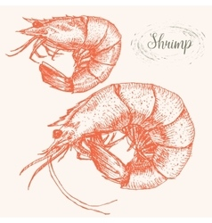 Hand drawn shrimps vector