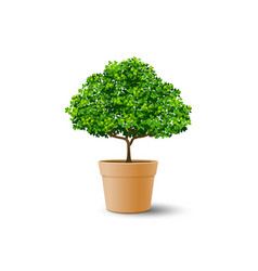 Tree plant in the pot vector