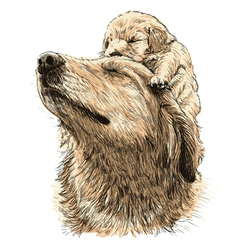 Labrador Retriever 20 vector image vector image