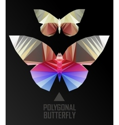 Color butterfly flying vector