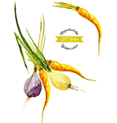 Watercolor vegetables Onion and carrot vector image