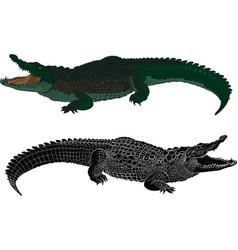 crocodile color and black silhouette vector image