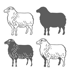 Domestic animal sheep design elements vector