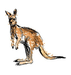 Colored hand drawing of a kangaroo vector