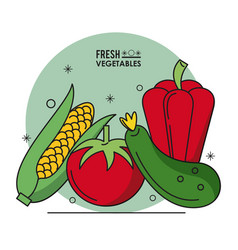 colorful poster fresh vegetables cob corn tomato vector image vector image