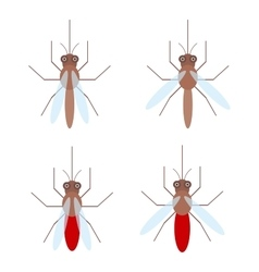 Set of mosquitoes with blood isolated on white vector