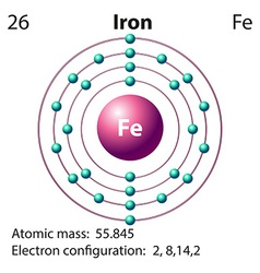 Flashcard of iron with atomic mass vector