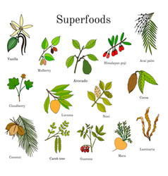 Set of hand drawn superfood vector