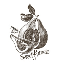 Pomelo logo design template fresh fruit vector