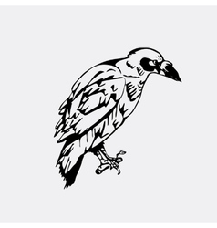Hand-drawn pencil graphics bird raven crow vector image