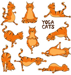 Funny red cat doing yoga position vector