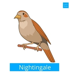 Nightingale learn birds educational game vector