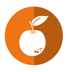 orange citrus fruit icon shadow vector image vector image