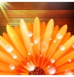 Flower with dew on wood plus EPS10 vector image