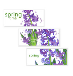 hyacinth banner vector image