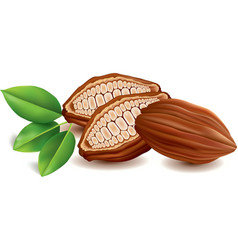 Sweet cacao beans with leaf vector