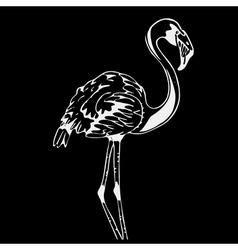 Hand-drawn pencil graphics bird flamingo linocut vector